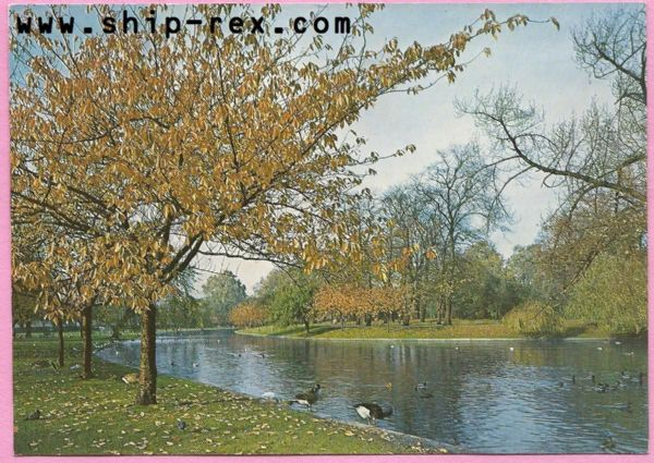 Regents Park, The Lake In Autumn - postcard